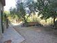 Espléndido olivar en Sa Figuera en Port de Sóller