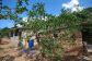 Soleado y bien mantenido huerto de naranjos en Sóller