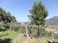 Bonito y soleado olivar en Sóller, con vistas despejadas al valle y al mar